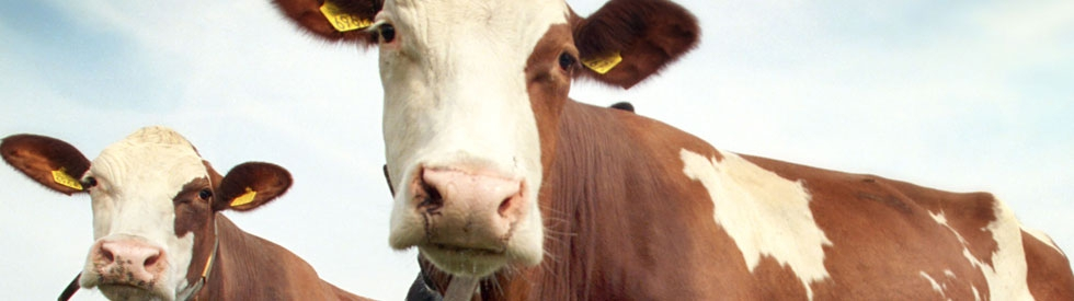 Feed management, your factor to success|